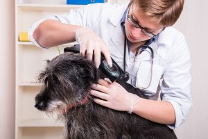Pet Parasites Prevention