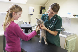 Cost of Using Mobile Vet Services