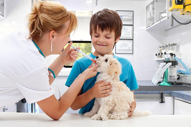 lady vet giving dog a shot