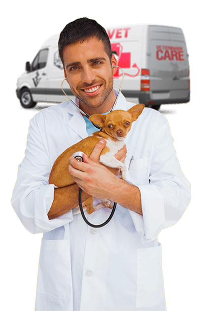 mobile vet holding chihuahua